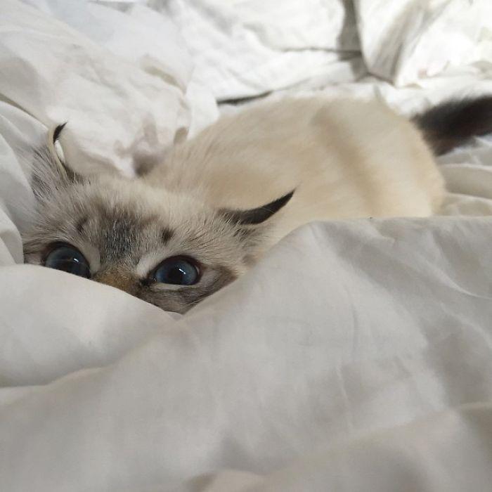 43 adoráveis gatinhos no meio de um ataque furtivo 11