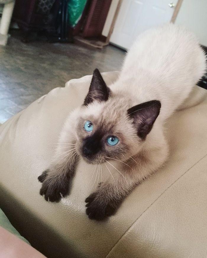 43 adoráveis gatinhos no meio de um ataque furtivo 12