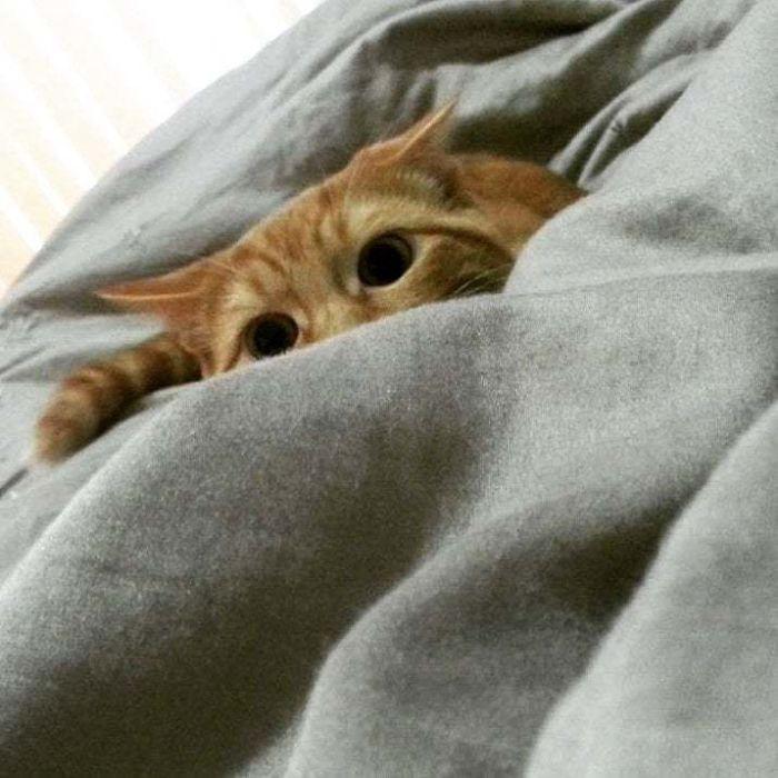 43 adoráveis gatinhos no meio de um ataque furtivo 13