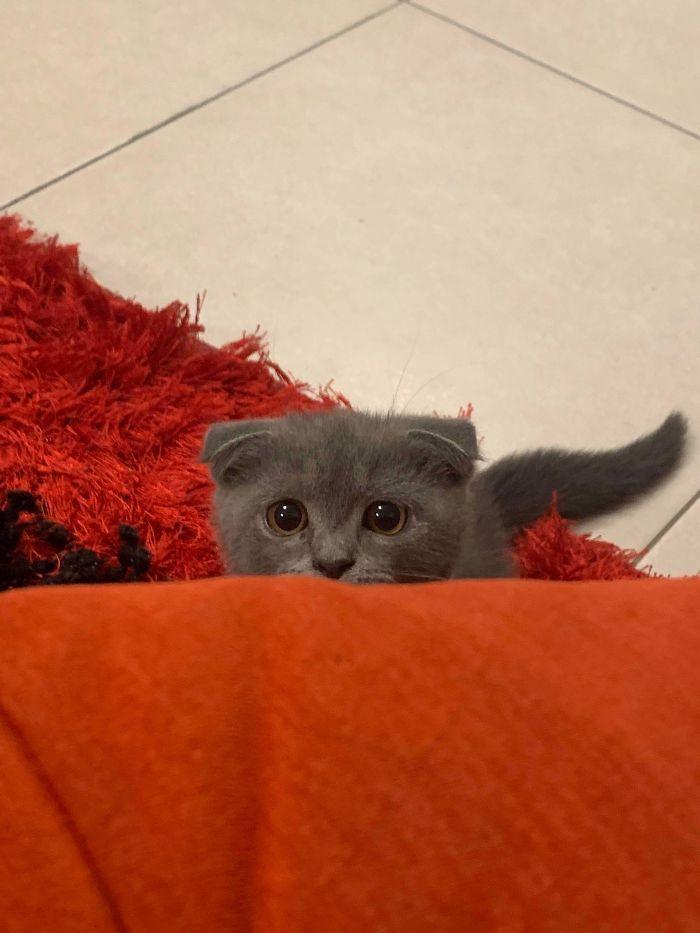 43 adoráveis gatinhos no meio de um ataque furtivo 16