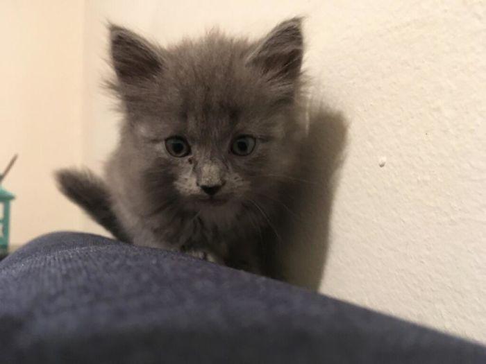 43 adoráveis gatinhos no meio de um ataque furtivo 18