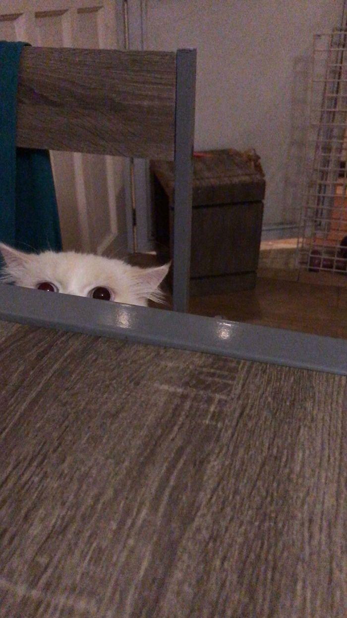 43 adoráveis gatinhos no meio de um ataque furtivo 20