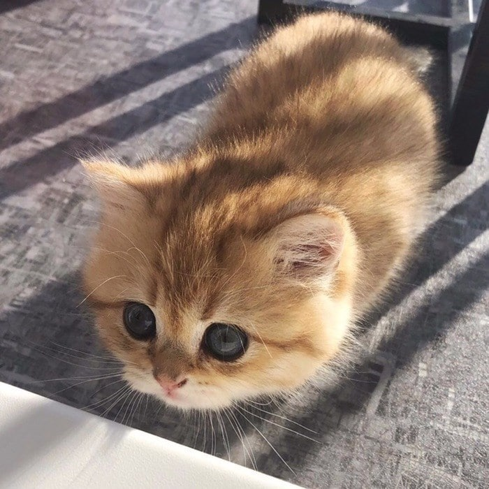 43 adoráveis gatinhos no meio de um ataque furtivo 25
