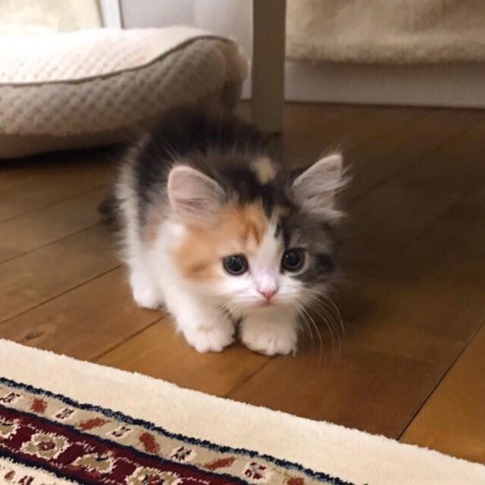43 adoráveis gatinhos no meio de um ataque furtivo 26