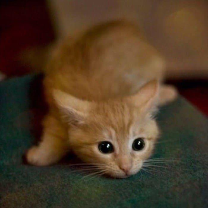 43 adoráveis gatinhos no meio de um ataque furtivo 27