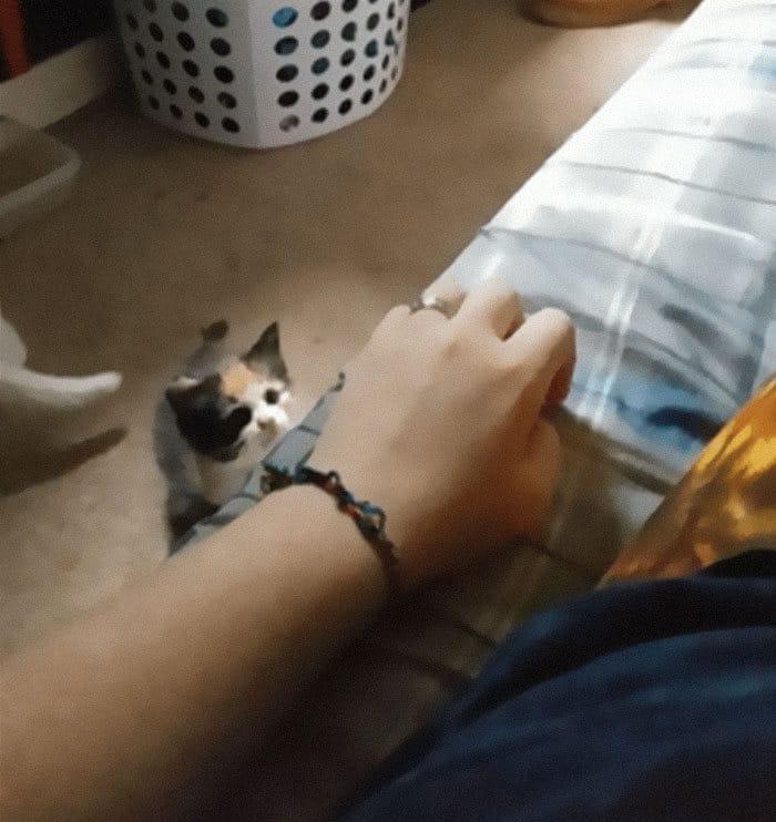 43 adoráveis gatinhos no meio de um ataque furtivo 31