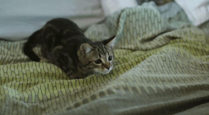 43 adoráveis gatinhos no meio de um ataque furtivo 32