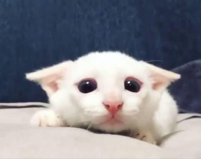 43 adoráveis gatinhos no meio de um ataque furtivo 34
