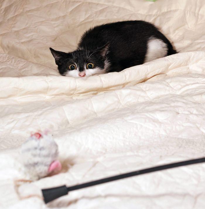 43 adoráveis gatinhos no meio de um ataque furtivo 35