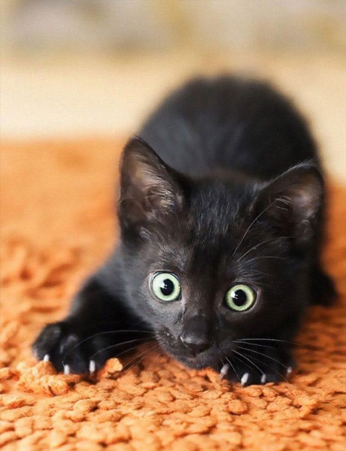 43 adoráveis gatinhos no meio de um ataque furtivo 36