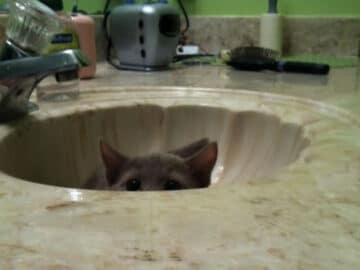 43 adoráveis gatinhos no meio de um ataque furtivo 37