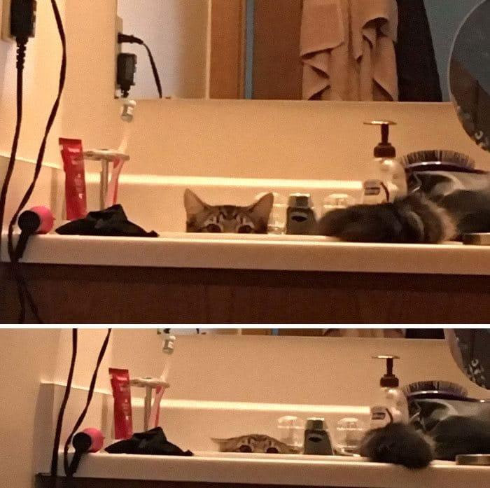 43 adoráveis gatinhos no meio de um ataque furtivo 38