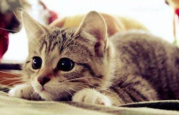 43 adoráveis gatinhos no meio de um ataque furtivo 39
