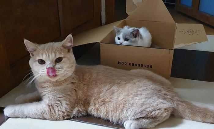 43 adoráveis gatinhos no meio de um ataque furtivo 40