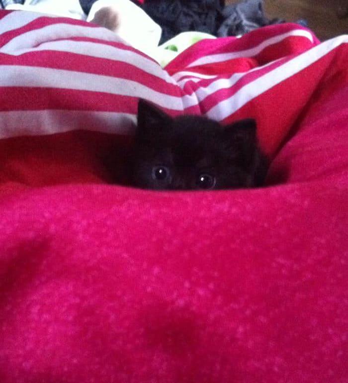 43 adoráveis gatinhos no meio de um ataque furtivo 41