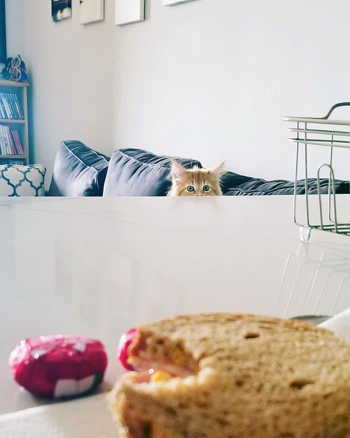 43 adoráveis gatinhos no meio de um ataque furtivo 42
