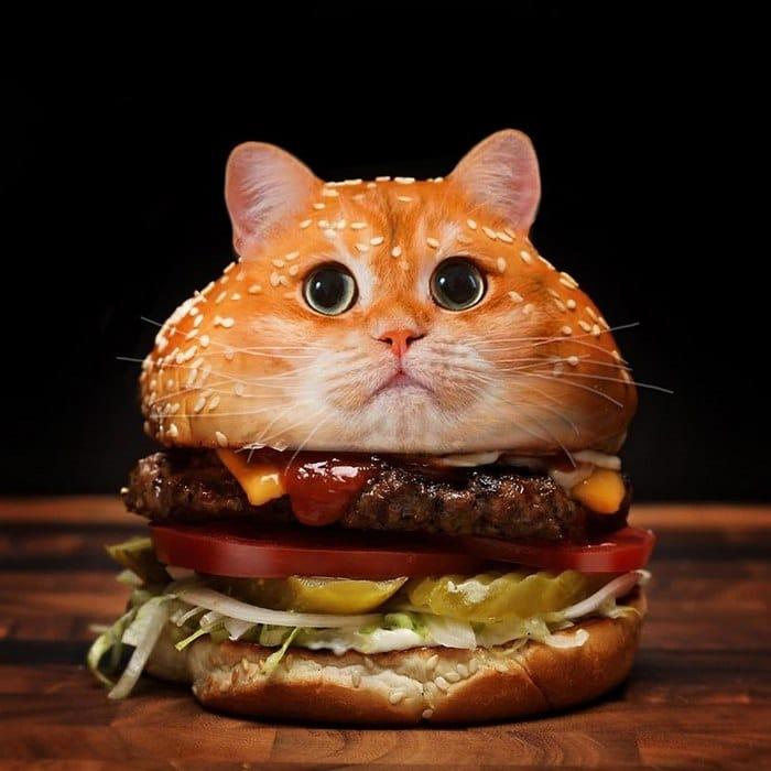 Alguém colocou animais em coisas aleatórias e a internet está adorando 9