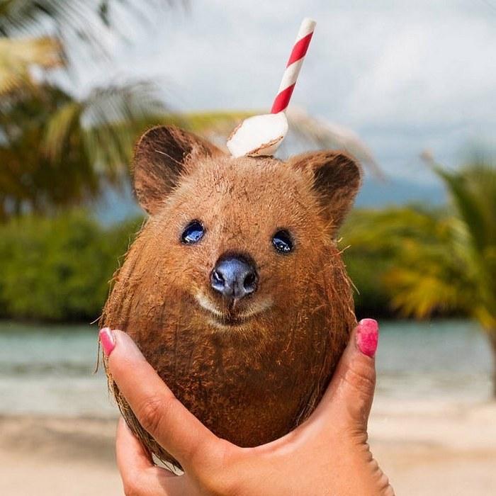 Alguém colocou animais em coisas aleatórias e a internet está adorando 16