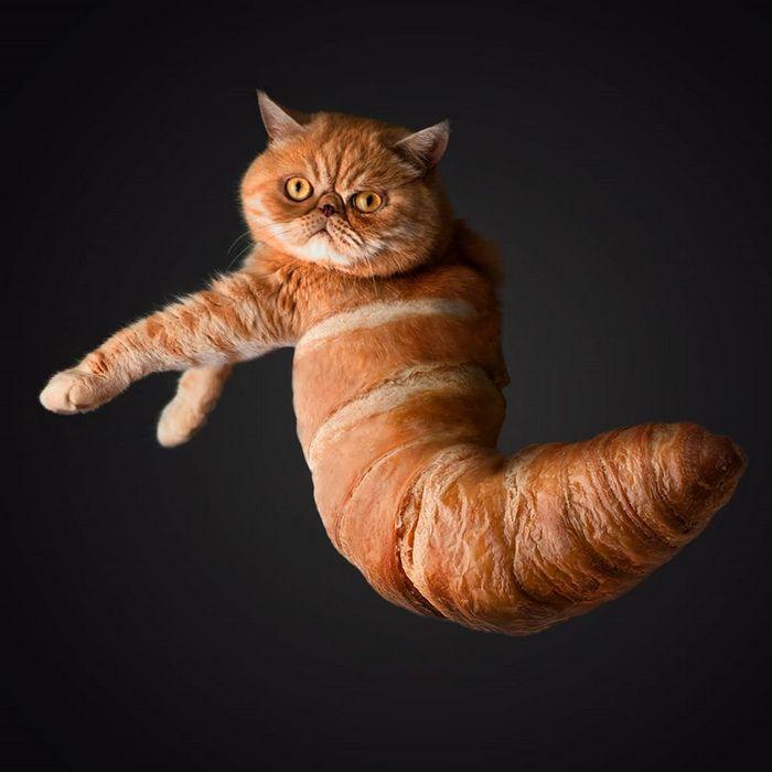 Alguém colocou animais em coisas aleatórias e a internet está adorando 26