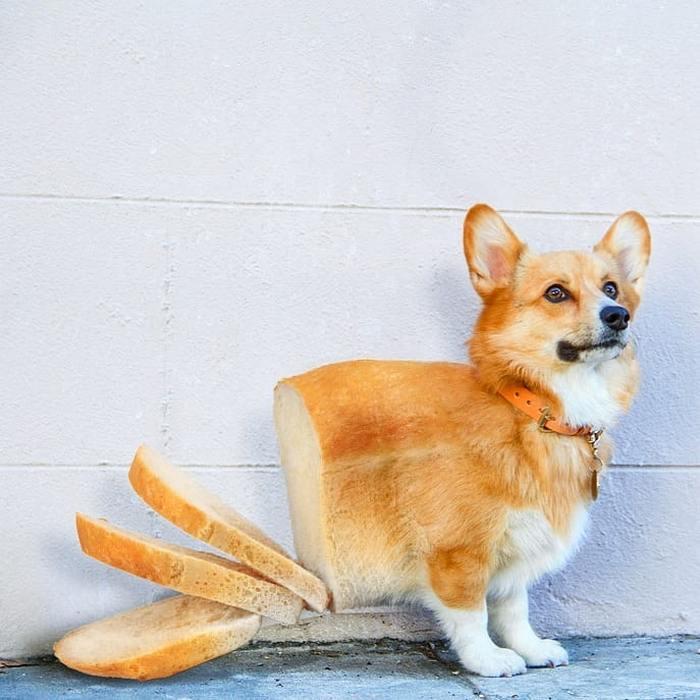Alguém colocou animais em coisas aleatórias e a internet está adorando 31