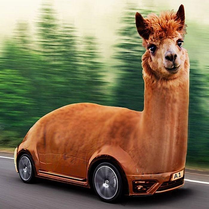 Alguém colocou animais em coisas aleatórias e a internet está adorando 34