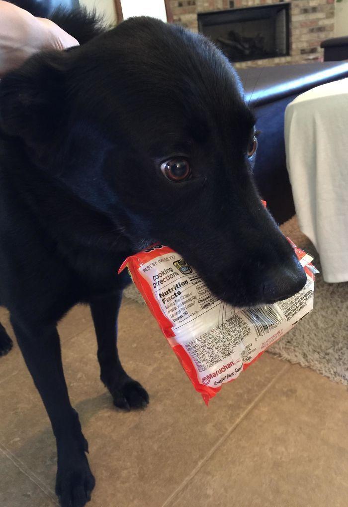 40 animais que foram pego em flagrante cometendo roubo de comida 9