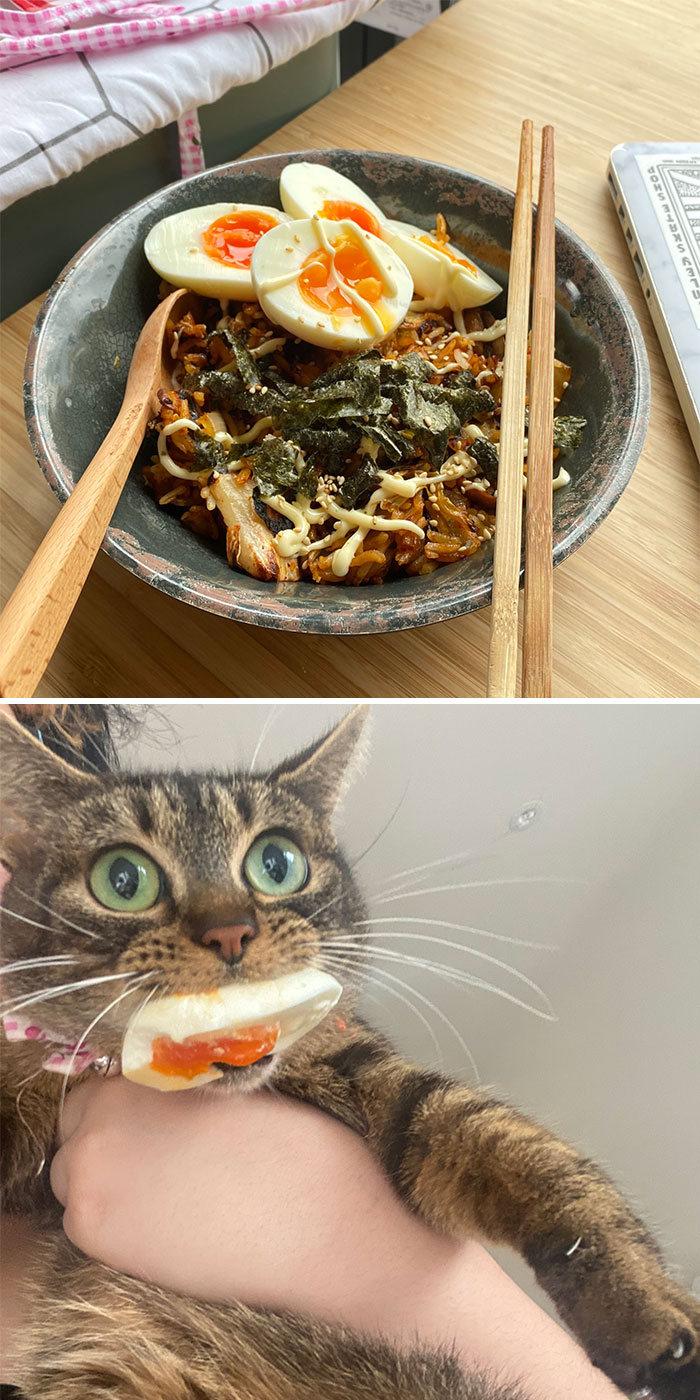 40 animais que foram pego em flagrante cometendo roubo de comida 23