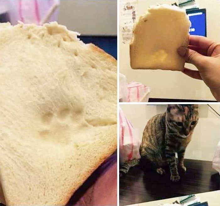 40 animais que foram pego em flagrante cometendo roubo de comida 31