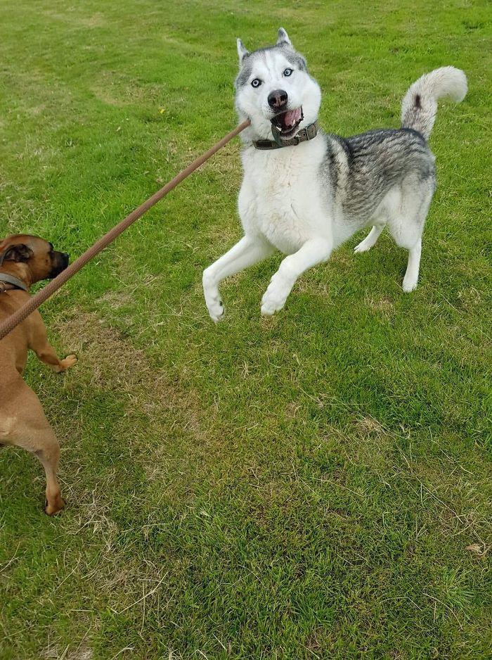 As pessoas estão compartilhando as fotos mais desagradáveis de seus cães, o que é hilário 3