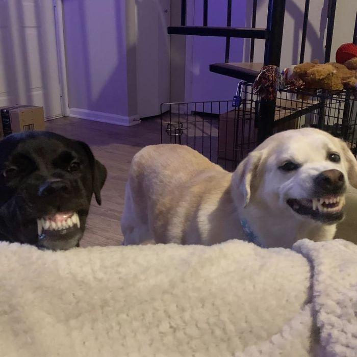 As pessoas estão compartilhando as fotos mais desagradáveis de seus cães, o que é hilário 10