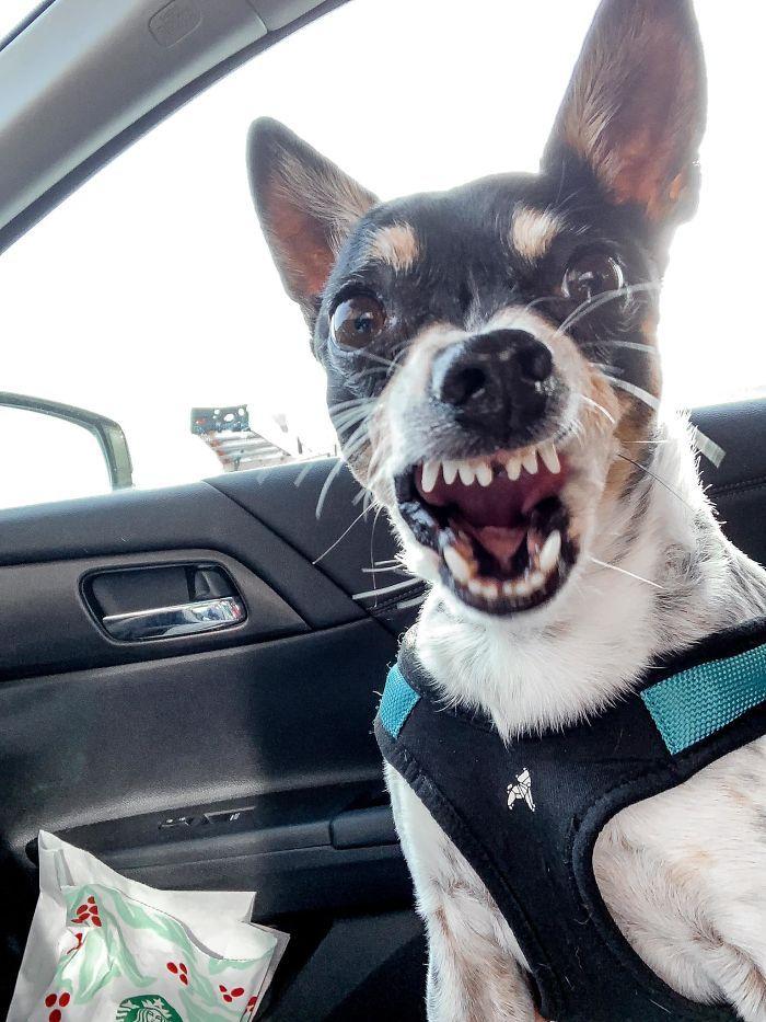 As pessoas estão compartilhando as fotos mais desagradáveis de seus cães, o que é hilário 12
