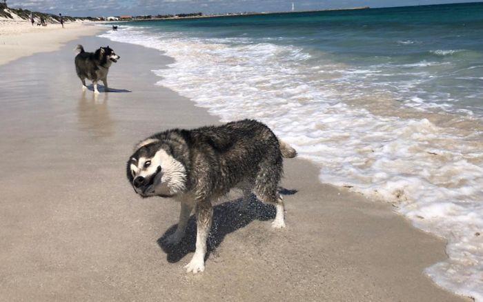 As pessoas estão compartilhando as fotos mais desagradáveis de seus cães, o que é hilário 17