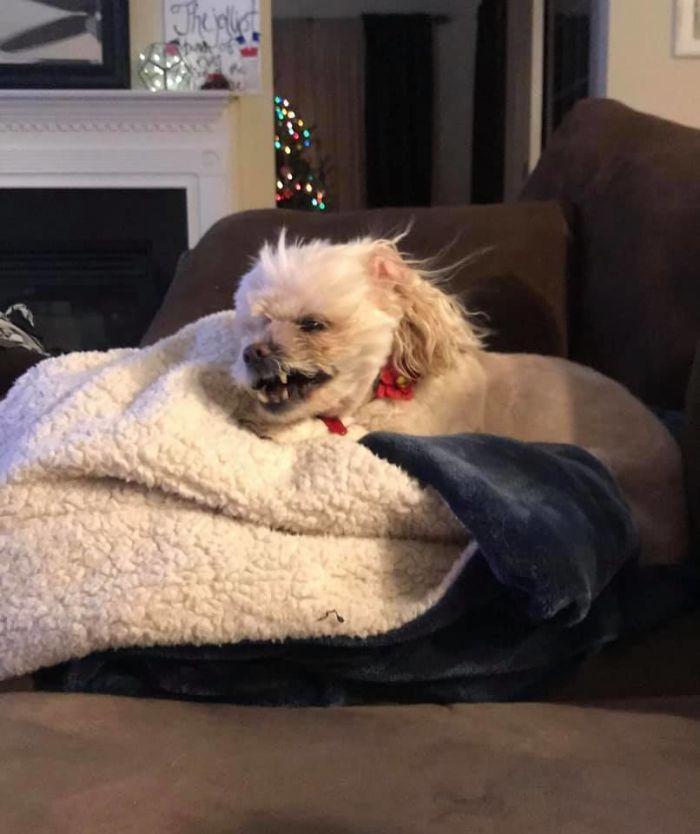 As pessoas estão compartilhando as fotos mais desagradáveis de seus cães, o que é hilário 22