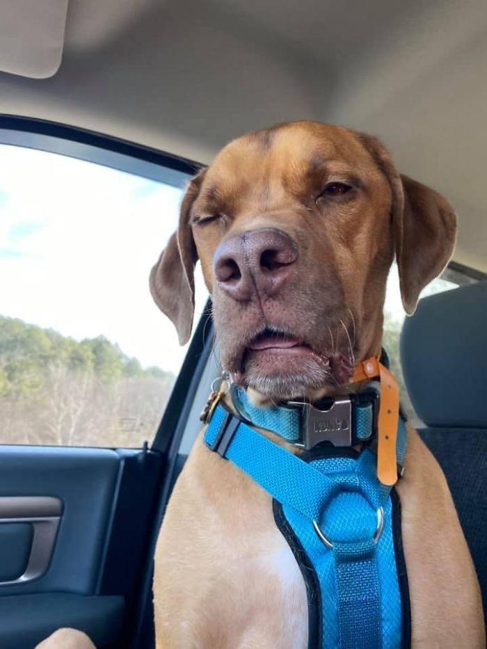 As pessoas estão compartilhando as fotos mais desagradáveis de seus cães, o que é hilário 30