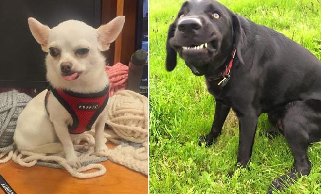 As pessoas estão compartilhando as fotos mais desagradáveis de seus cães, o que é hilário 33