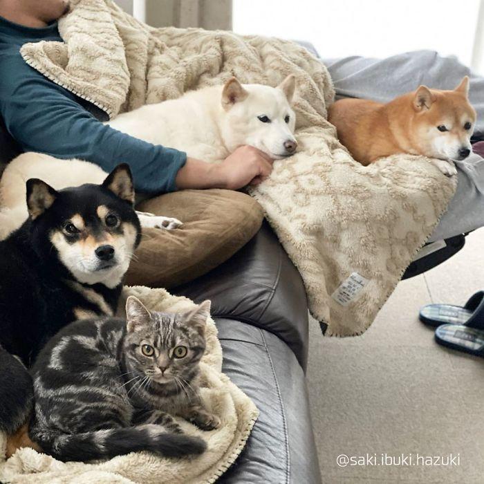 Este adorável gato se sente e age como se não fosse diferente de seus irmãos 5