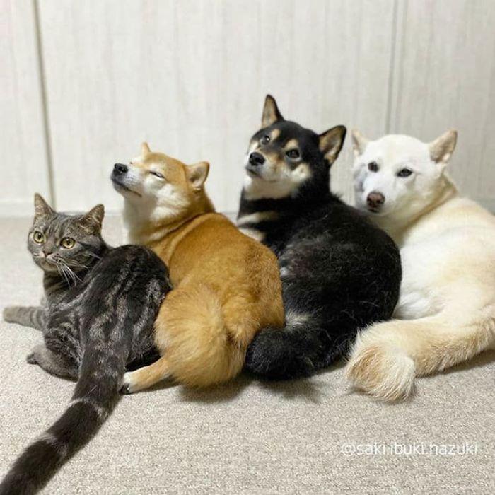 Este adorável gato se sente e age como se não fosse diferente de seus irmãos 12