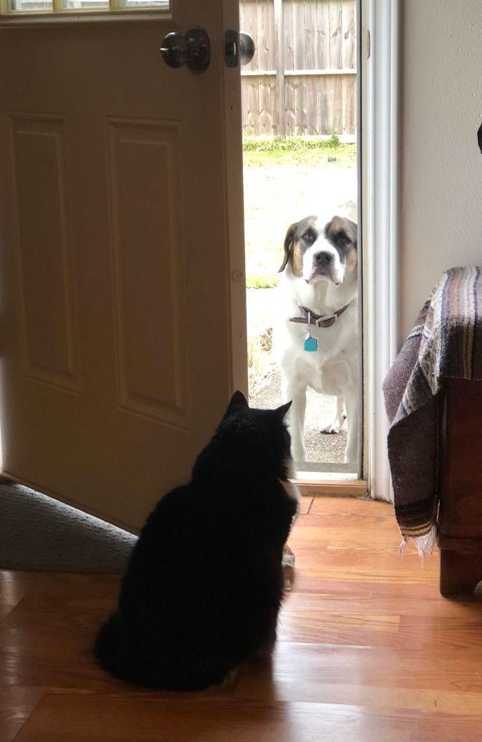 39 fotos divertidas de gatos perturbando cachorros 5