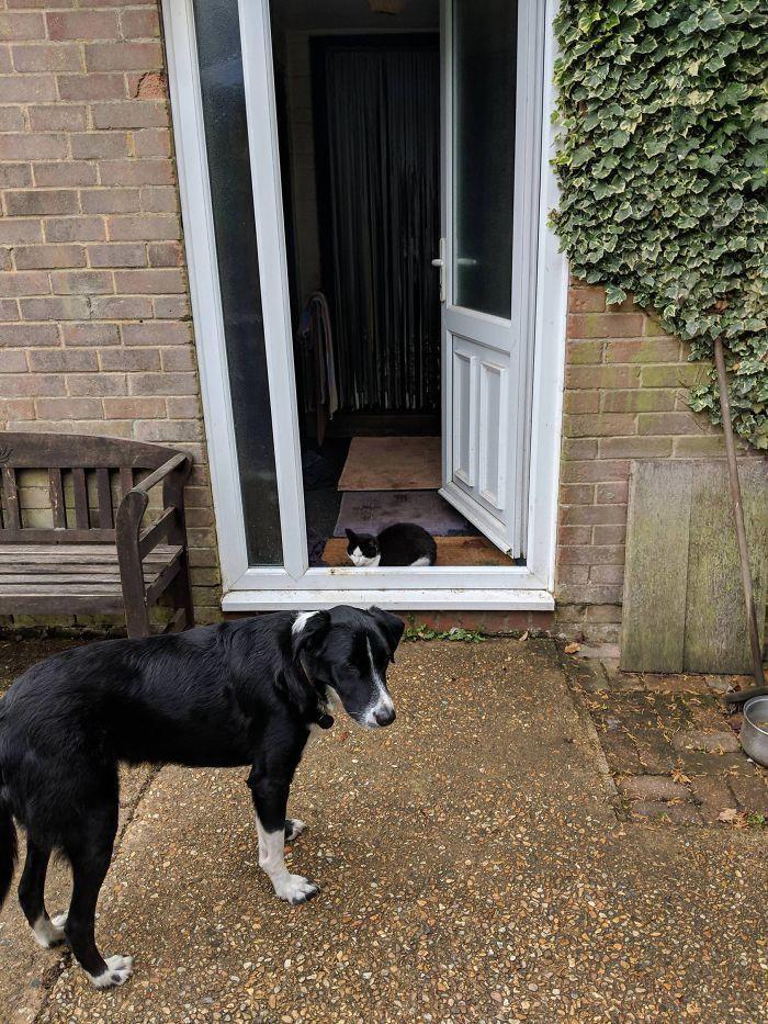 39 fotos divertidas de gatos perturbando cachorros 7