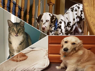 39 fotos divertidas de gatos perturbando cachorros 29