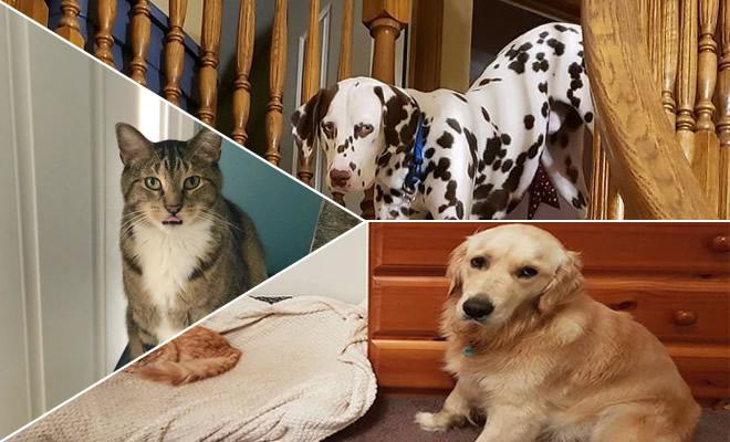 39 fotos divertidas de gatos perturbando cachorros 1