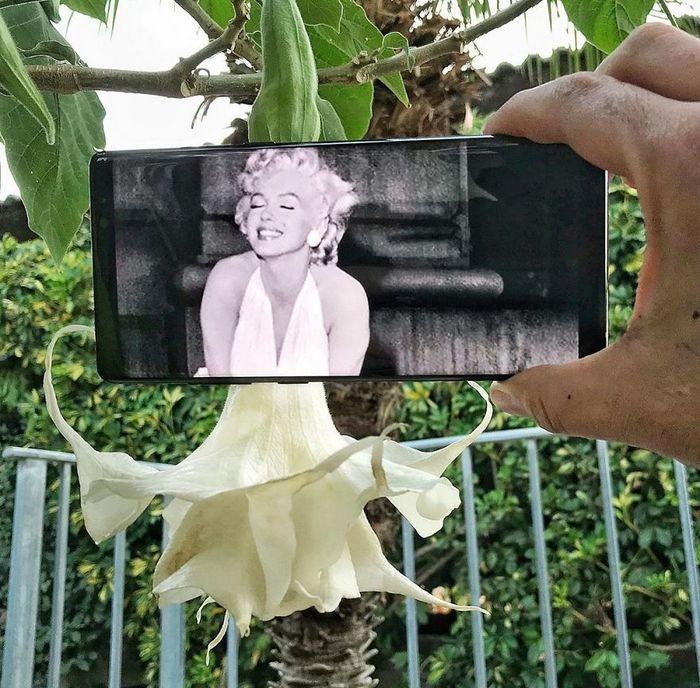 Fotos divertidas tiradas com dois smartphone 2