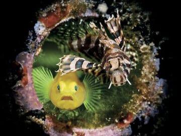 26 fotos vencedora do concurso de fotógrafo subaquático do ano de 2020 2
