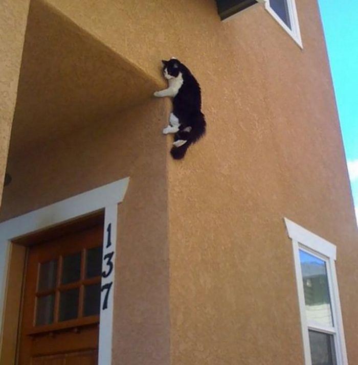 25 gatos que imediatamente se arrependeram de suas más escolhas 4