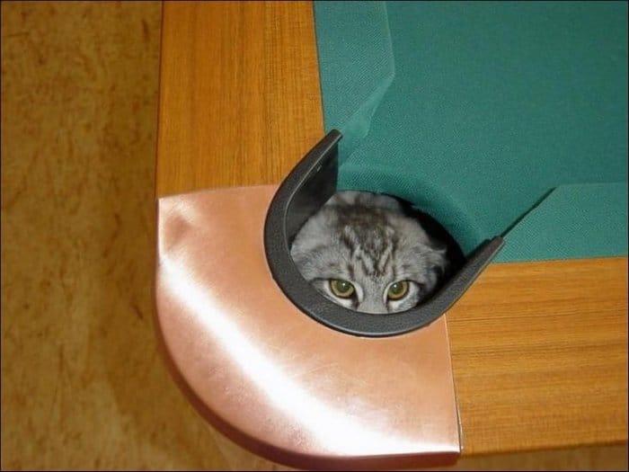 25 gatos que imediatamente se arrependeram de suas más escolhas 5