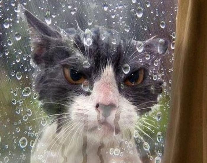 25 gatos que imediatamente se arrependeram de suas más escolhas 6