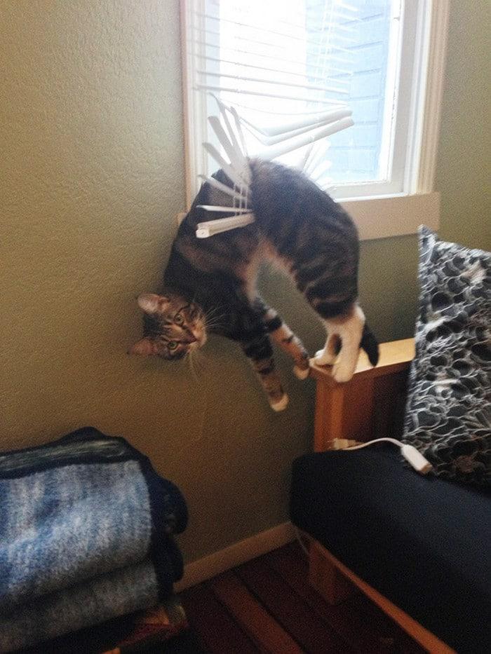 25 gatos que imediatamente se arrependeram de suas más escolhas 9