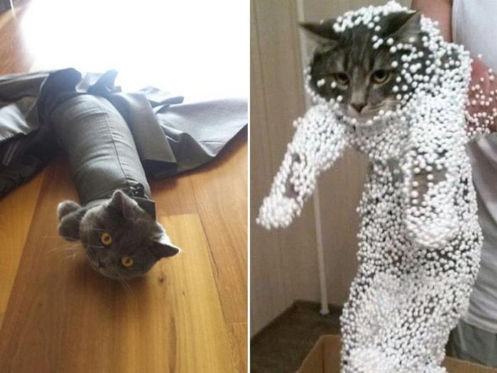 25 gatos que imediatamente se arrependeram de suas más escolhas 11