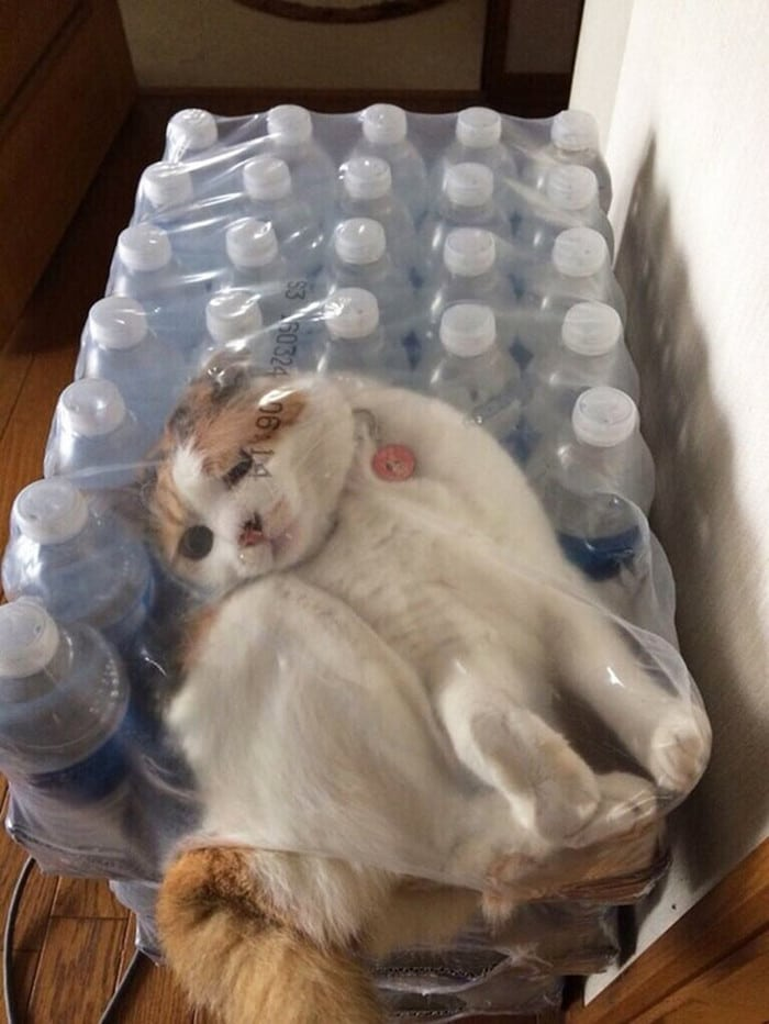 25 gatos que imediatamente se arrependeram de suas más escolhas 12