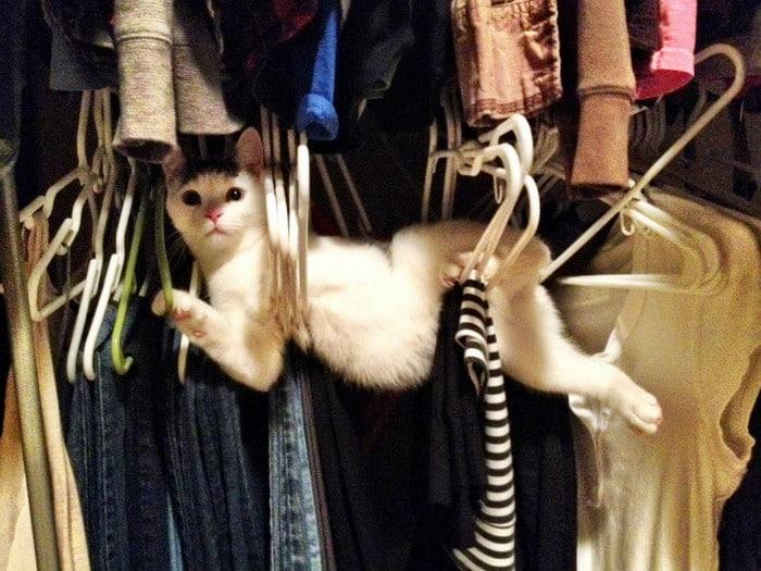 25 gatos que imediatamente se arrependeram de suas más escolhas 14